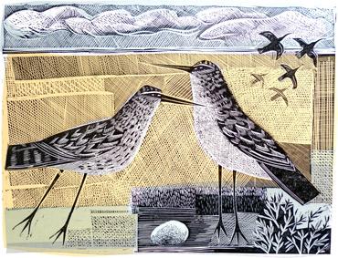 Norfolk Birds by Angela Harding