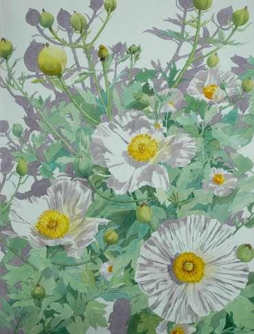 Tree Poppy by Mary Rodgers