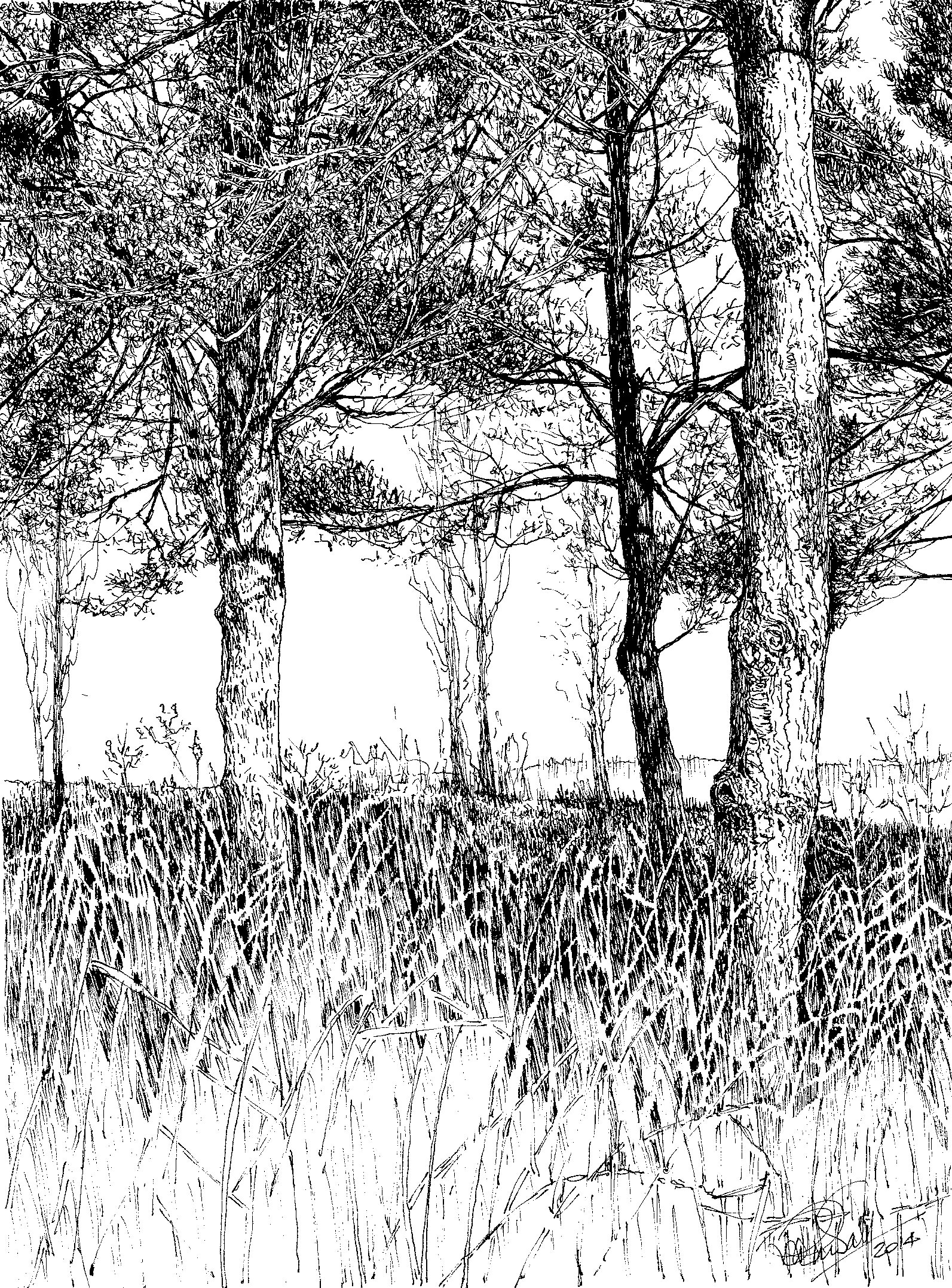 Scots Pine, Beacon Hill by Ruth Randall