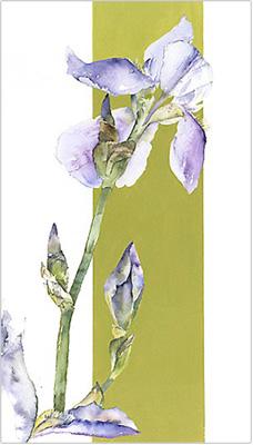 Iris 1 by Vivienne Cawson