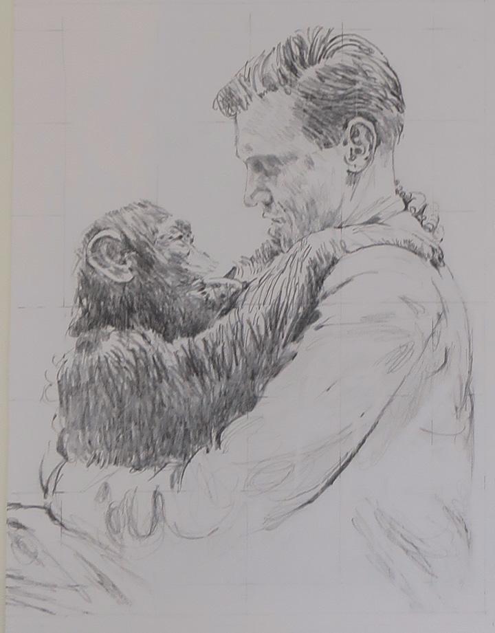 Drawing by Bryan Organ of David Attenborough