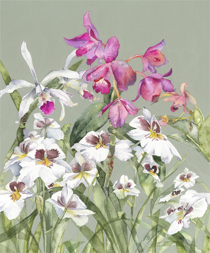 Vivienne Cawson, 'Kew's Orchids'