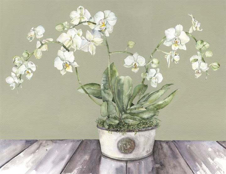 Vivienne Cawson, 'Moth Orchid in Kew Pot'