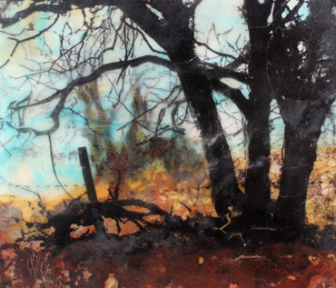 Introduction image for Woodland Wanders - Jo Sheppard