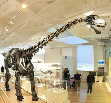 Dinosaur gallery at New Walk Museum Leicester
