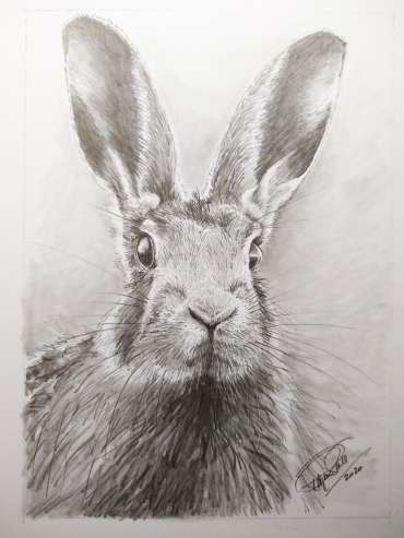 Thumbnail image of Ruth Randall, 'Hare' - Inspired | April