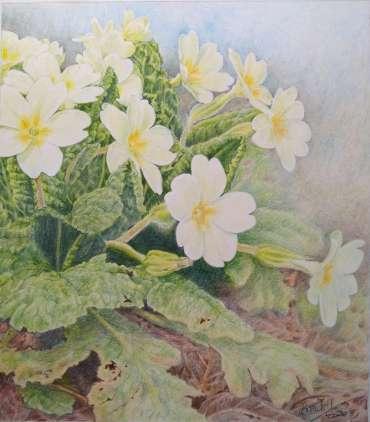 Thumbnail image of Ruth Randall, 'Primroses' - Inspired | April