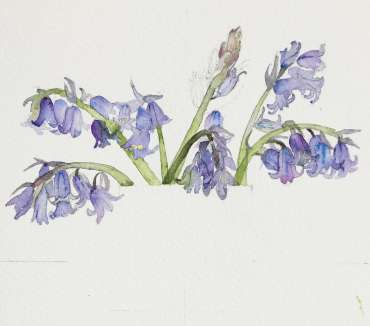 Thumbnail image of Vivienne Cawson, 'Bluebells in Coalport' - Stage 1 - Inspired |  May