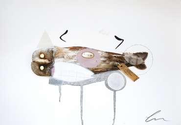 Thumbnail image of Lucy Stevens, 'Barn Owl (Amelia)' - Inspired | June