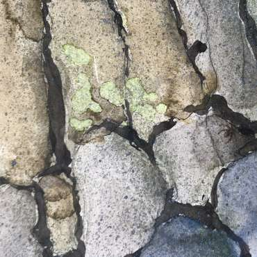 Thumbnail image of David Clarke, 'Old Stone Wall' - Work in Progress (detail) - Inspired | July