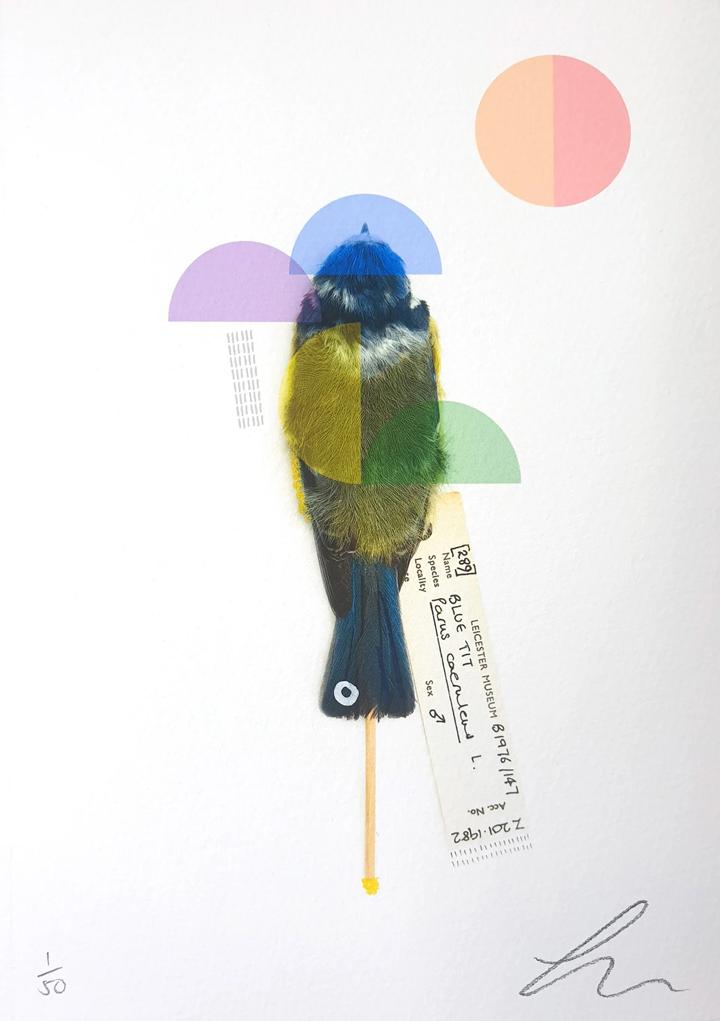 Lucy Stevens, 'Blue Tit (Rainbow'