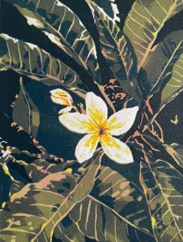 Thumbnail image of 23 | Mandeep Dhadialla | Frangipani - LSA Annual Exhibition 2021 | Catalogue D - L