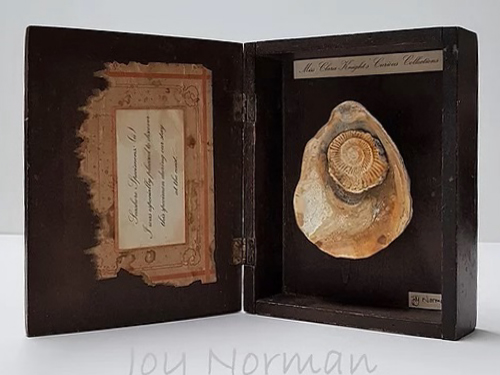 Joy Norman, Seaside Specimens