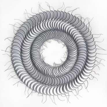 Thumbnail image of Circling by Amy Bonsor