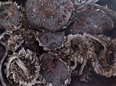 Thumbnail image of Dried Sunflowers by Andrew Jackson