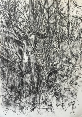 Thumbnail image of Broken Tree, Aylestone meadows by Deborah Ward