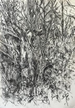 Thumbnail image of Broken Tree, Aylestone meadows by Deborah Ward