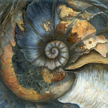 Ammonite by Jo Sheppard