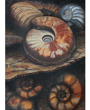 Thumbnail image of Ammonites by Jo Sheppard