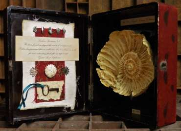 Thumbnail image of Miss Clara Knight's Curious Collections, Seashore Specimens (v) by Joy Norman