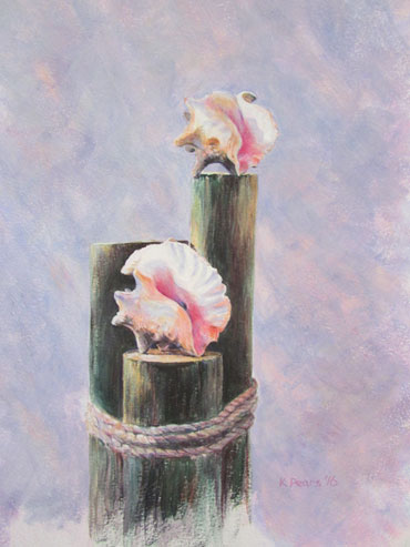 Conch Collection by Kerry Pears