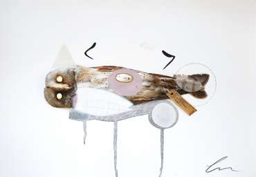 Thumbnail image of Barn Owl (Amelia) by Lucy Stevens