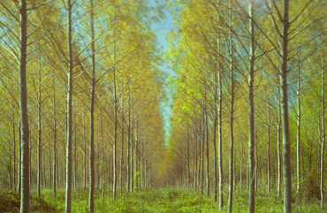 Thumbnail image of Tree Plantation by Michael Moralee