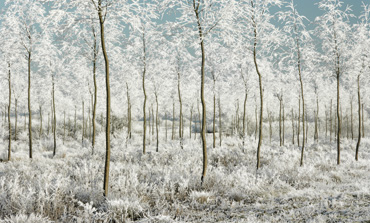 Thumbnail image of Winter Magic by Michael Moralee