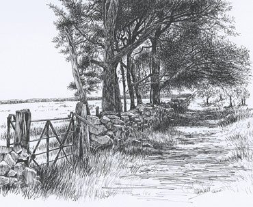Thumbnail image of Gate & Pines on Warren Hill by Ruth Randall