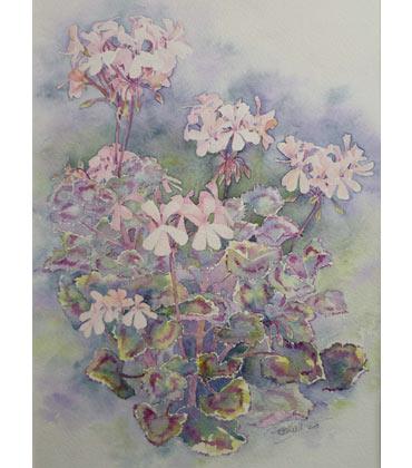 Thumbnail image of Zonal Pelgargonium by Ruth Randall
