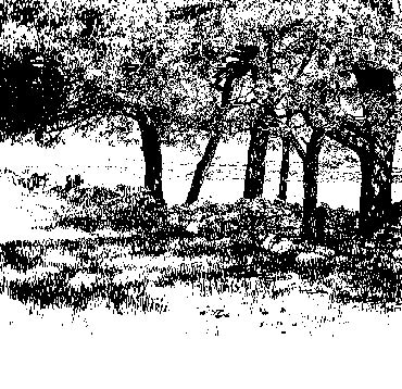Thumbnail image of Pines on Warren Hills by Ruth Randall