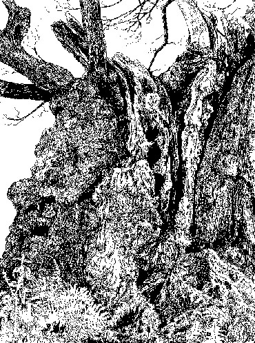 Thumbnail image of Old Man of Calke by Ruth Randall