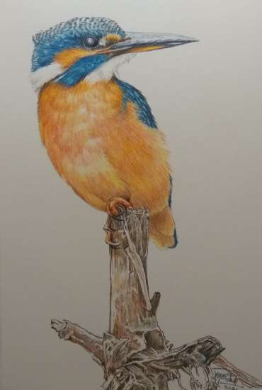 Kingfisher by Ruth Randall