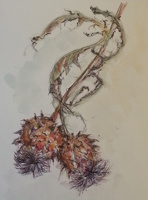 Thumbnail image of Cardoon 1 by Toni Northcott