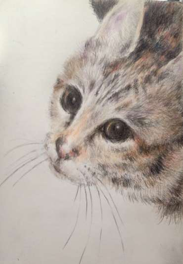 Thumbnail image of The Resident Tiger by Vivien Blackburn