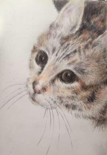 Thumbnail image of The Resident Tiger by Vivien Blackburn