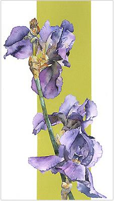 Iris 2 by Vivienne Cawson