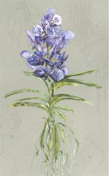 Thumbnail image of Blue Vanda by Vivienne Cawson