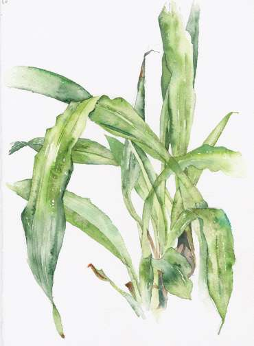 Thumbnail image of Vivienne Cawson, 'The Kew Book of Painting Orchids in Watercolour' - Vivienne Cawson - The Kew Book of Painting Flowers in Watercolour is published in January 2020