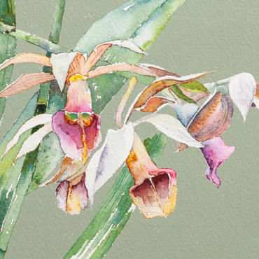 Introduction image for Vivienne Cawson - The Kew Book of Painting Flowers in Watercolour is published in January 2020